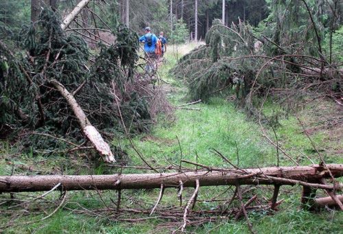 Über umgestürzte Bäume laufen