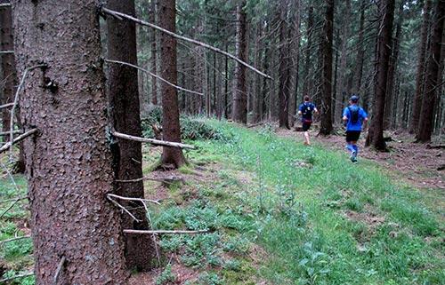 Laufen im Wald