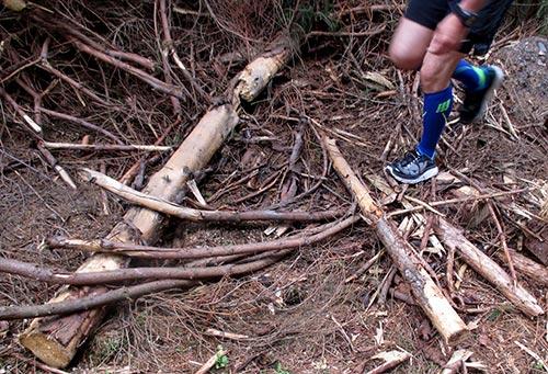 Trail: Über Gehölz laufen