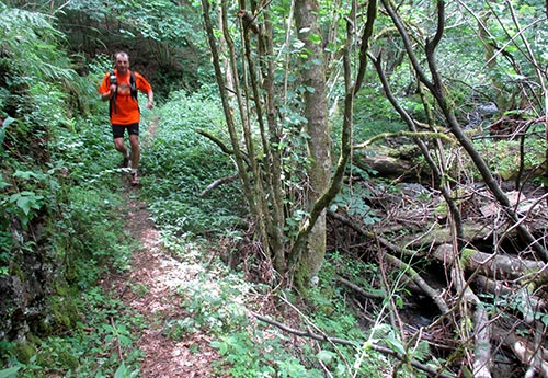 Single-Trail am Bach entlang