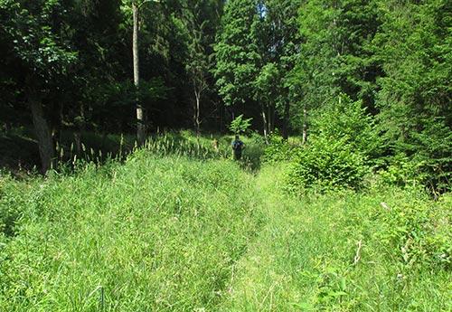 Laufen durch hohes Gras
