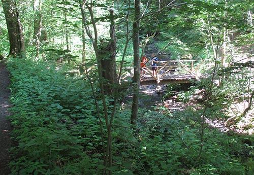 Brücke bei hohen Tannen