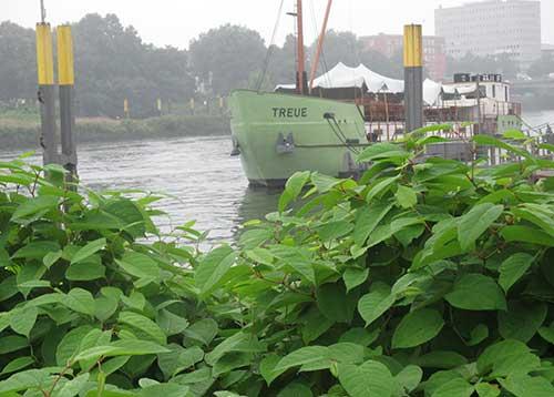 Schiff Treue auf der Weser