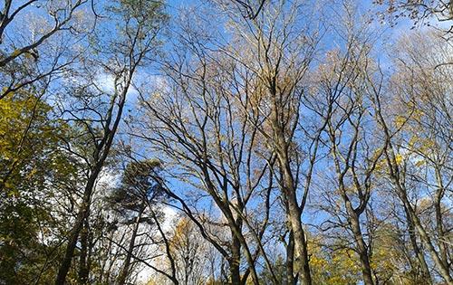 Herrliches Herbstwetter beim Schmalzstullenlauf 2015
