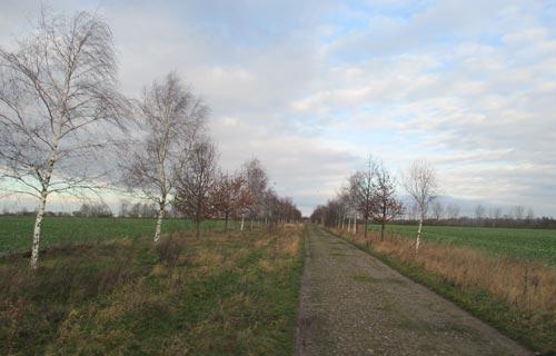 Frühlingshafte Landschaft kurz vor Weihnachten