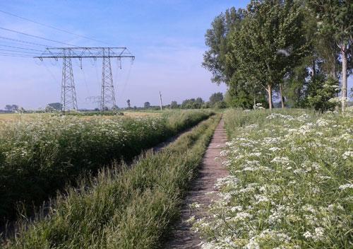 Zwischen den Feldern und Wiesen hinter Schloss Diedersdorf