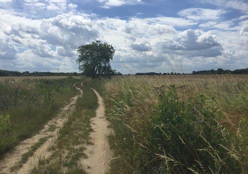 Feldweg bei Ruhlsdorf
