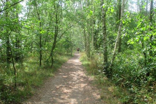 Der schöne Streckenabschnitt bei Buckow