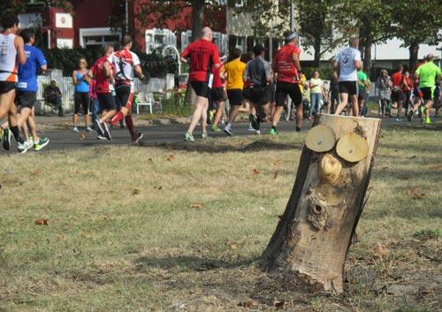 Ein Baumgesicht am Streckerand staunt über das Marathon-Treiben