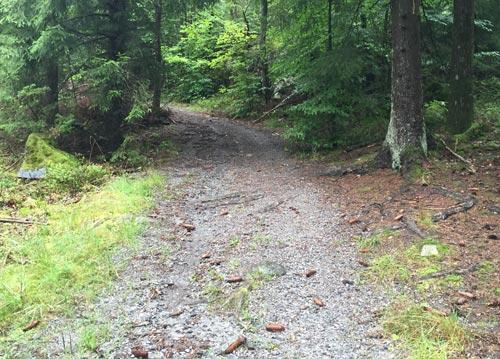 Waldweg nach der ersten Steigung