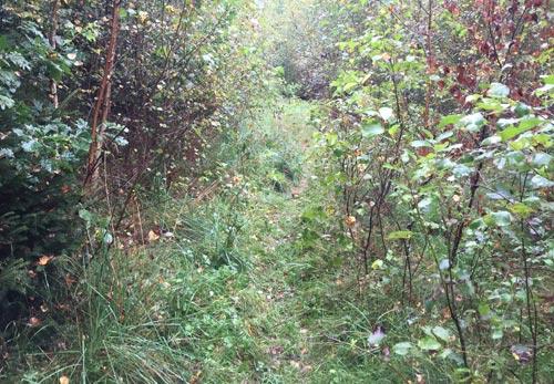 Ein echter Single Trail