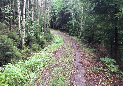 Waldweg im Färgensjöarnas Naturreservat