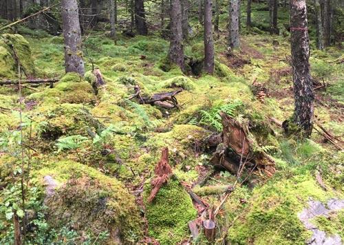 Verwunschene Stimmung mit moosbedecktem Waldboden