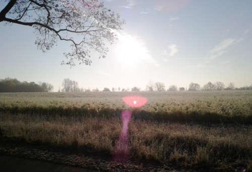 Blick auf die Felder im Gegenlicht
