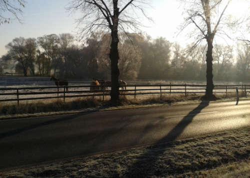 Pferdekoppel in der Morgensonne