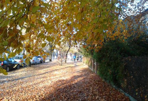 Leuchtende Blätter: Laufen im Herbst
