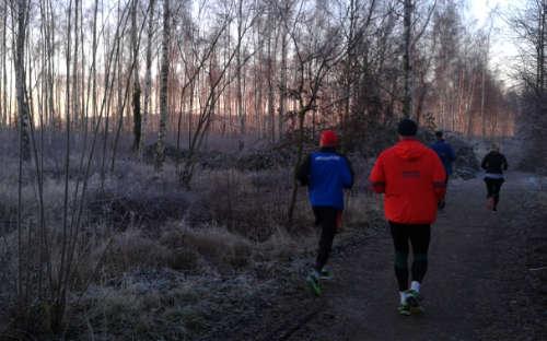 Läufer vor Birkenwäldchen