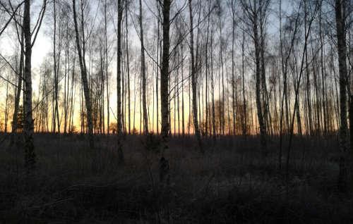 Sonnenaufgang zwischen den Bäumen