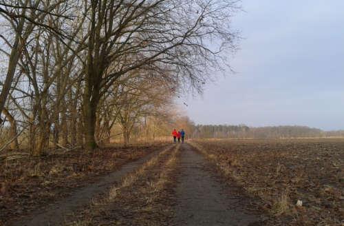 Läufer auf dem Feldweg nahe des Hexenhäuschens