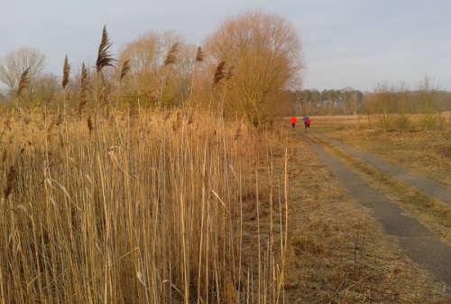 Laufen mit Wintersonne