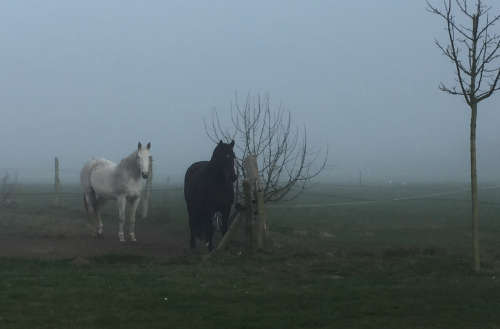 Pferde an der Landstraße