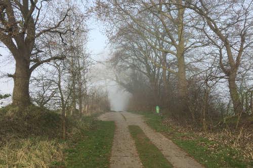 Plattenweg zur Steilküste bei Wustrow