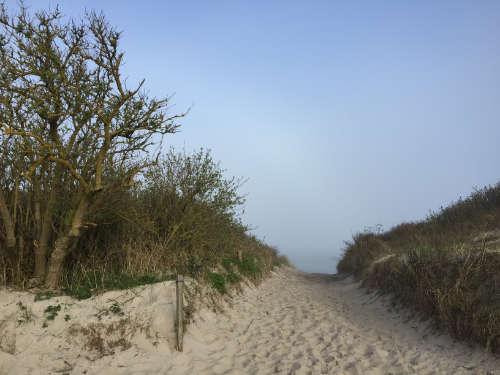 Blick auf die neblige Ostsee