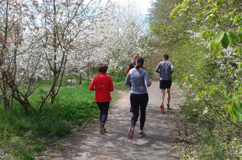 Laufen im Frühling – die Bäume blühen