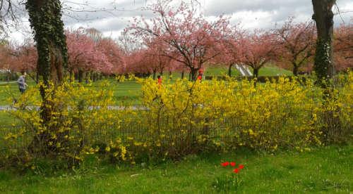 Läufer am Lilienthal-Denkmal im Frühling
