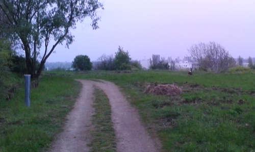 Reh – Lauf-Schnitzeljagd im Freizeitpark Marienfelde