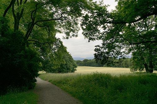 Parkwege und Wiesen