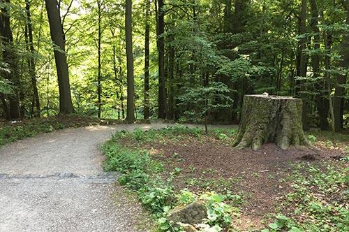 Waldweg neben den Kaskaden