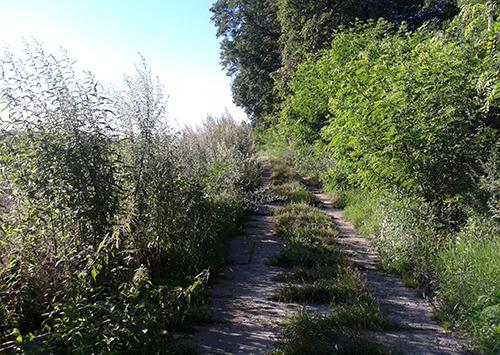 Zugewachsener Weg nach Diedersdorf