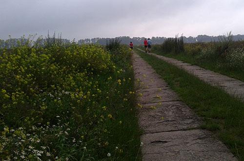 Läufer auf Weg zwischen Feldern