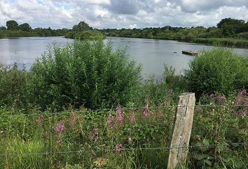 Naturschutzgebiet Neue Weser