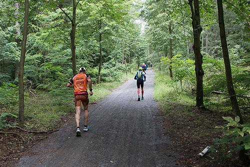 Mauerwegläufer im Wald