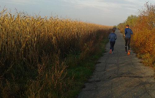Läufer neben Maisfeld im Herbst
