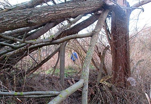 Umgestürzte Bäume auf dem Pfad