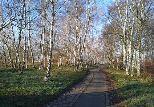 Wintersonne im Birkenwäldchen