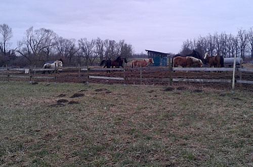 Pferde in der Koppel