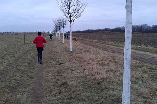 Läufer auf den Luchwiesen