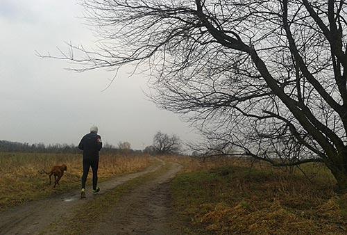 Läufer in den Feldern bei Stahnsdorf