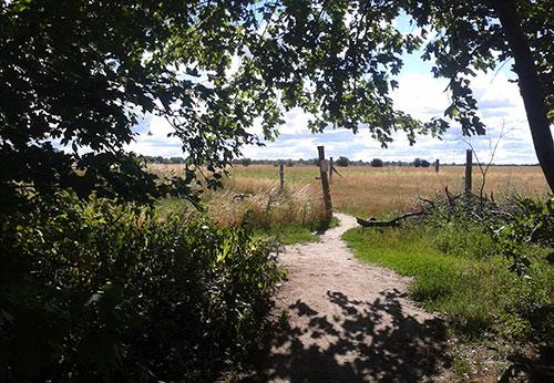 Läuferblick aus dem Wäldchen auf das Feld