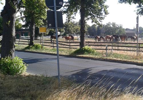 Pferdekoppel in Großziethen