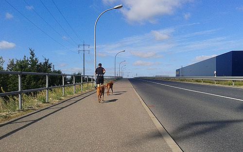 Läufer mit Hunden auf der Hans-Grade-Allee