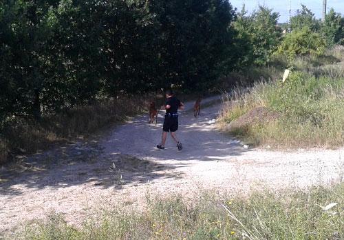 Läufer auf dem Feldweg neben der Bahntrasse Waßmannsdorf