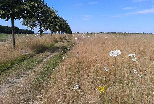 Feldweg nahe Weinberg Großziethen