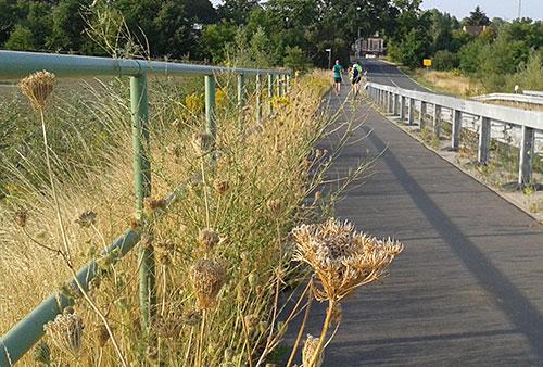 Läufer auf der Brücke zwischen Birkholz und Mahlow
