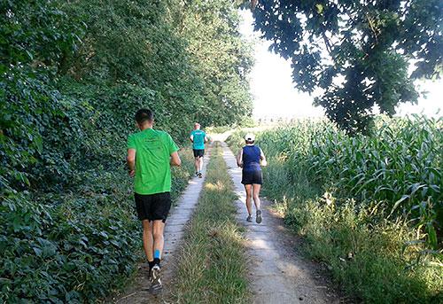Läufer am Maisfeld