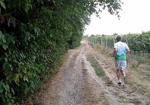 Läufer in den Weinbergen bei Freyburg